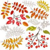 Collection abstract autumn element Stock Photos