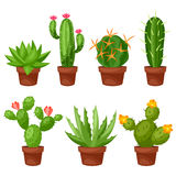 Collection of abstract cactuses in flower pot Stock Photo