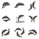 Dolphin emblem set. Collection with abstract emblem of dolphin and sea wave Stock Image