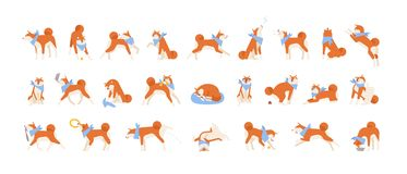 Collection of Akita Inu performing daily activities. Set of cute Japanese dog sleeping, playing, barking, howling