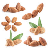 Collection of almond nuts Royalty Free Stock Image