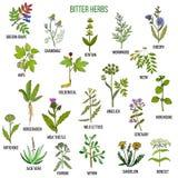 Collection amère d'herbes illustration libre de droits