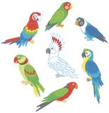 Funny colorful parrots Royalty Free Stock Photography