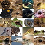 Collection of animal eyes Stock Photos