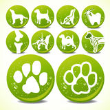 Collection of animal foot prints Stock Images