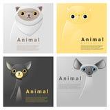 Collection animale de portrait avec des chats Photo libre de droits
