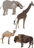 Collection of animals Stock Images