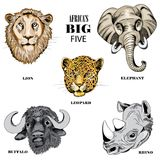 Collection of animals from Africa`s big five. Vector illustration on white background. Hand drawn collection of animals from Africa`s big five on white stock illustration