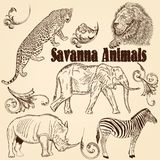 Collection of  animals  African Savanna Royalty Free Stock Images