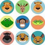 Collection of animals Stock Photo