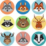 Collection of animals Royalty Free Stock Photography