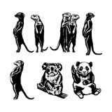 Collection of animals royalty free illustration