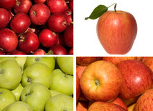 Collection of apples Royalty Free Stock Images