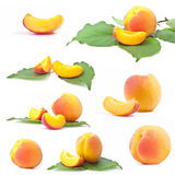 Collection of apricot Stock Photography