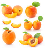 Collection of apricot fruits Stock Images