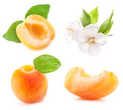 Collection of apricots Royalty Free Stock Photos