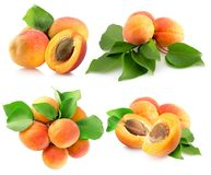 Collection of apricots isolated on a white background Stock Photos