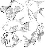 Collection of aquarium fish Stock Photos