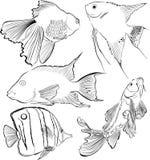 Collection of aquarium fish Stock Photos