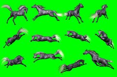 Collection of arabian horse poses. 3D rendering of a collection on chroma key background of arabian horse poses Royalty Free Stock Photo