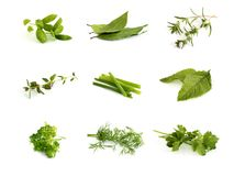 Collection of aromatic herbs stock images