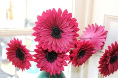 Collection artificial silk gerbera daisies Royalty Free Stock Images