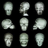Collection of asian skull Royalty Free Stock Image