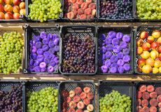 Collection of assorted fruits. On the market Stock Photography