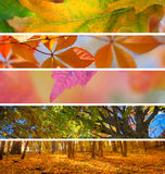 Collection of Autumn Banners - fall season abstract background royalty free stock images