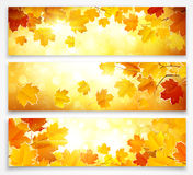 Collection of autumn banners. Natural background with leaves and bright sunlight. Vector illustration Royalty Free Stock Images
