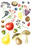 Collection of autumn fruits, nuts and mushrooms Royalty Free Stock Images