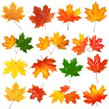 Collection of autumn leaf Stock Image
