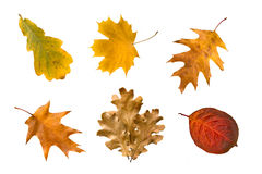 Collection of autumn leaves Stock Images