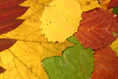 Collection of autumn leaves Royalty Free Stock Photos