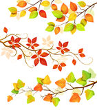 Collection of autumn leaves stock illustration