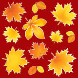 Collection autumn leaves Royalty Free Stock Images