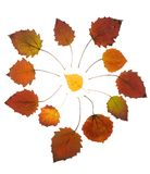 Collection autumn leaves of asp tree Stock Images