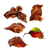 Collection Autumn Leaves, d'isolement Images stock