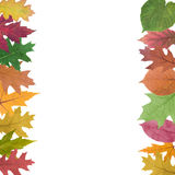 Collection of  autumn leaves Stock Photos