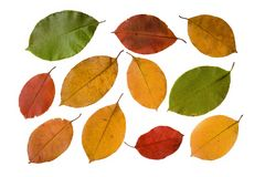 Collection autumn leaves isolated on white Royalty Free Stock Photos