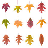 Collection of  autumn leaves Stock Image