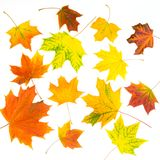 Collection of autumn leaves on white. Stock Image