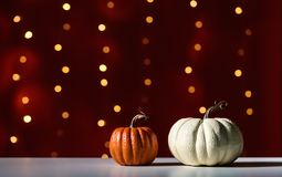 Collection of autumn pumpkins. On a shiny light dark red background Royalty Free Stock Photo