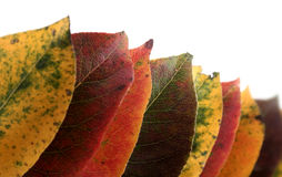 Collection of autumnal leaf Stock Photos