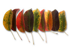 Collection of autumnal leaf Stock Images