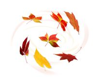 Collection of autumnal leaf Royalty Free Stock Image