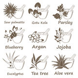 Collection of Ayurvedic Herbs. Stock Image