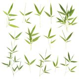 Collection of bamboo leaves. Isolated on white background stock photo