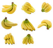 Collection of    bananas cluster. Stock Photography