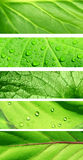 Collection of banners with green leaf texture stock photo